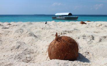 coconut-1577282960720